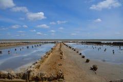 埃利通湖 盐提取的前植物 库存图片