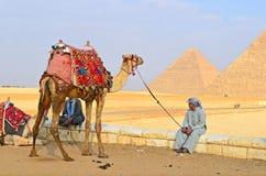 埃及。吉萨棉。在金字塔附近的骆驼 免版税库存照片