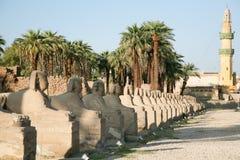 埃及人带头的狮身人面象行 免版税库存照片