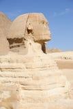 埃及吉萨棉极大的狮身人面象 免版税图库摄影