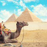 埃及开罗-吉萨棉 免版税图库摄影