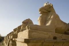 埃及狮子 库存图片