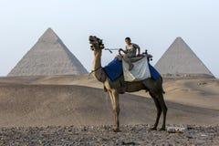 埃及男孩坐在吉萨棉前面金字塔的一头骆驼在开罗,埃及 免版税图库摄影