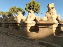 埃及的一个古庙的废墟有雕象和专栏的 库存图片