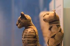 从埃及的猫妈咪 免版税库存照片