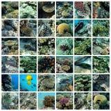 埃及红海 库存照片