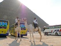 埃及金字塔特写镜头。 库存照片