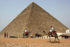 埃及骆驼和马车手在开罗盘旋胡夫金字塔的基地在埃及 图库摄影