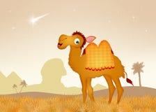 埃及骆驼在沙漠 免版税库存照片