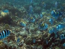 埃及鱼红海水下的塔巴 库存照片