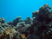 埃及鱼红海水下的塔巴 免版税库存照片
