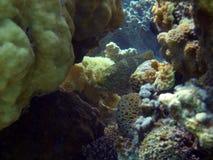 埃及鱼红海水下的塔巴 图库摄影