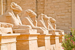埃及karnak卢克索纪念碑 图库摄影