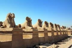 埃及karnak狮身人面象雕象寺庙 免版税库存图片