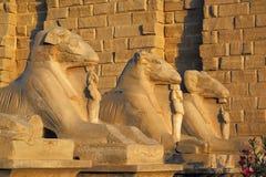 埃及karnak狮身人面象雕象寺庙 库存图片