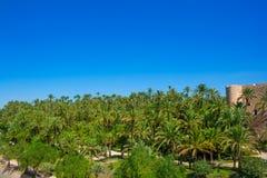 埃尔切Elx阿利坎特与许多棕榈树的el Palmeral 免版税库存图片