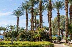 埃拉特散步的美丽如画的公园,反对蓝天和红海,埃拉特,以色列 库存图片