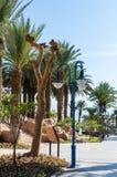 """埃拉特,以色列†""""2017年11月7日:有棕榈树的,灯笼城市散步,进入距离 免版税图库摄影"""