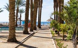 """埃拉特,以色列†""""2017年11月7日:胡同,供以座位与高棕榈树,导致在红海的海滩 免版税图库摄影"""