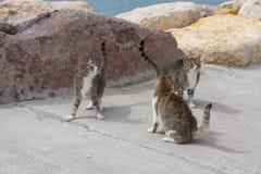 埃拉特,以色列猫  许多猫在街道和海滩离开  免版税图库摄影