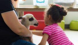 埃斯基谢希尔,土耳其- 2017年5月05日:爱抚羊羔的愉快的小女孩在动物几天事件在幼儿园 免版税库存图片