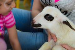 埃斯基谢希尔,土耳其- 2017年5月05日:爱抚羊羔的甜小女孩在动物几天事件在幼儿园 免版税库存照片