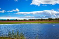 埃斯特雷马杜拉dehesa草原湖在西班牙 免版税库存照片