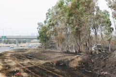 埃潘林区大火的后果 免版税库存图片