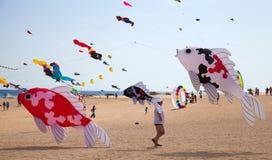 费埃特文图拉岛,西班牙, 2014年11月08日,风筝节日 免版税图库摄影