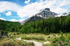 埃菲尔峰顶,班夫国家公园 免版税库存照片
