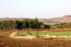 埃赛俄比亚的农业 库存照片