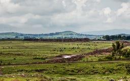 埃赛俄比亚的农村横向 免版税库存图片