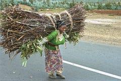 埃赛俄比亚的妇女走用力拖大柴把 免版税库存图片