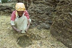埃赛俄比亚的妇女从母牛粪燃料盘做 库存图片