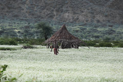 埃赛俄比亚的房子 库存照片