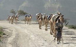 埃赛俄比亚2头骆驼的有蓬卡车 免版税库存照片