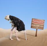 埋没头的害怕的驼鸟在沙子在危险下 库存图片