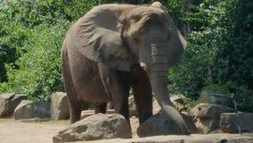 费城动物园 库存图片