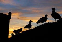 城堡和海鸥在日落时间。索维拉。平均观测距离 图库摄影