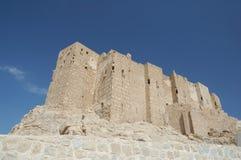 城堡扇叶树头榈 免版税库存照片