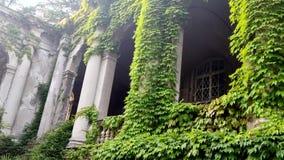 城堡曲拱和柱子纠缠与绿色常春藤 股票录像