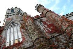 城堡穿的爱尔兰常春藤 免版税库存图片