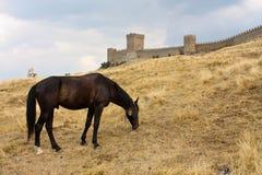 城堡马和墙壁  免版税库存图片