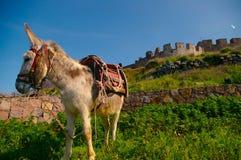 城堡驴 免版税库存图片
