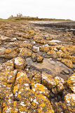 城堡dunstanburgh地衣 免版税库存图片
