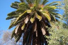 城市†‹伯利恒†‹ 巴勒斯坦 异乎寻常的南部的植被风景在一个晴朗,晴天停放区域和城市视图 免版税图库摄影