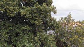 城市全景从后面树 4K 股票视频
