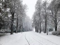 城市公园冬天视图  免版税库存图片