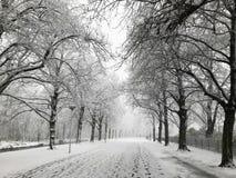 城市公园冬天视图  免版税图库摄影
