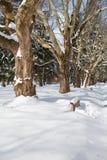 城市公园在冬天 免版税库存图片